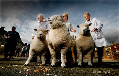 Masham Sheep Fair Yorkshire