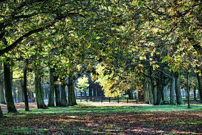 Autumn Temple Newsam Trees