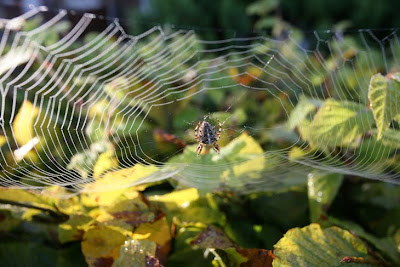 Spiders web Yorkshire