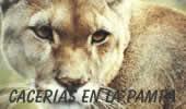 """El león de América """"el puma"""""""