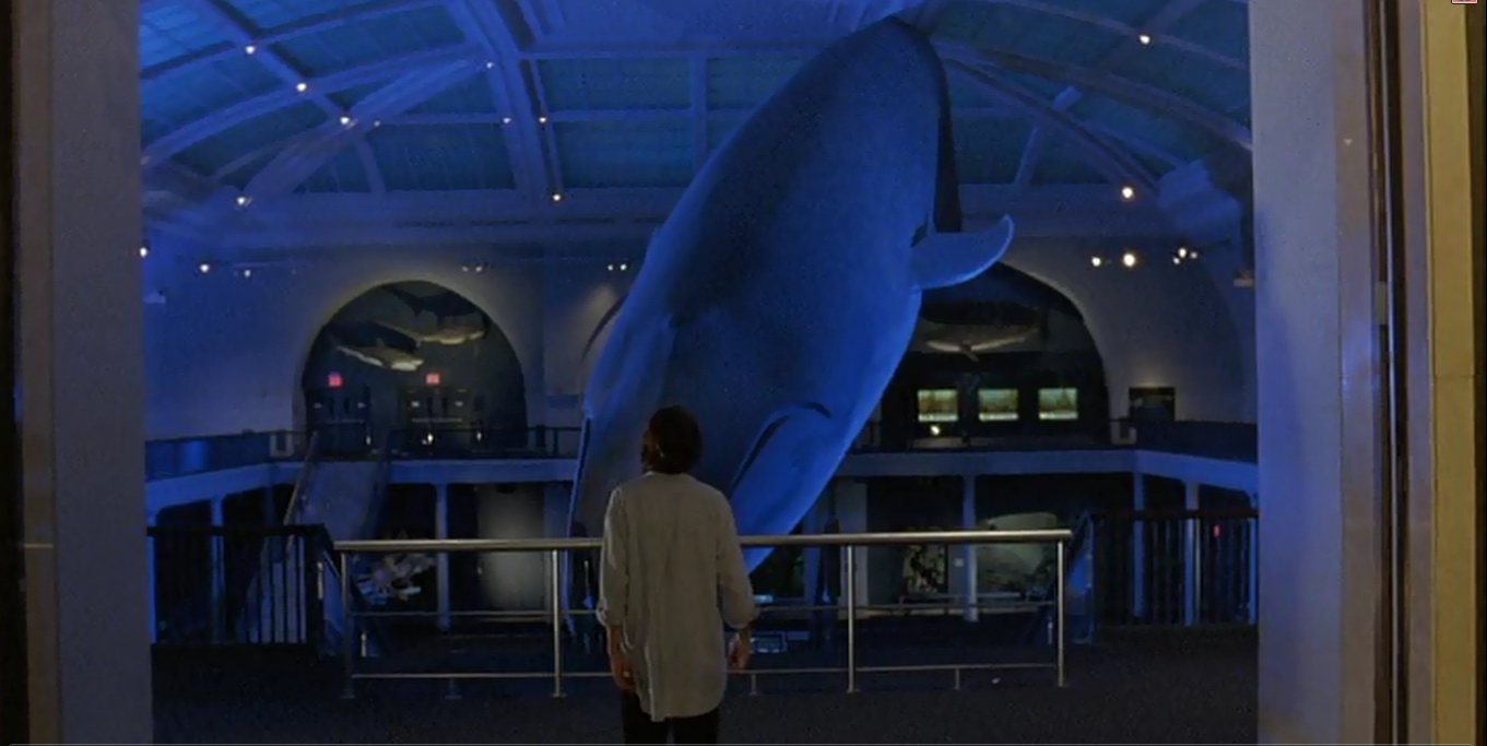 the squid and the whale Only writer-director noah baumbach and his immediate circle know how much of  the squid and the whale is autobiographical, but he's.