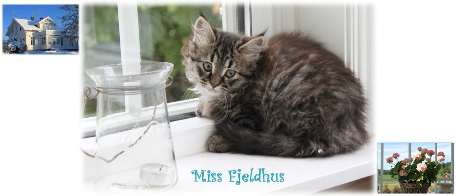 Miss Fjeldhus