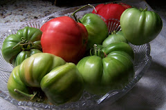 Tomatoes 2009 season
