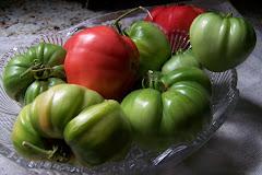 Tomatoes 2009 season