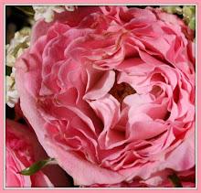 Rosen...und mehr... (slideshow)
