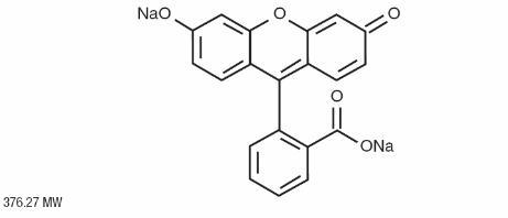 cluster divulgación científica fluorescencia y fosforescencia