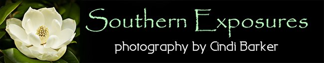 Southern Exposures
