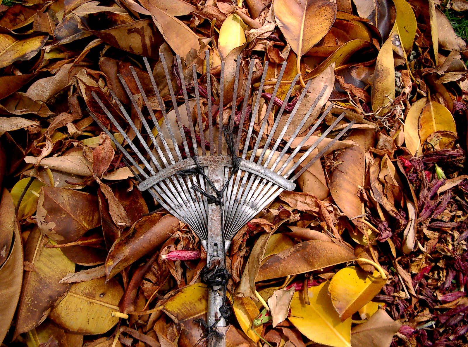 hojas secas video: