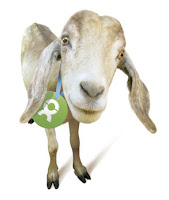 Oxfam Unwrapped goat.