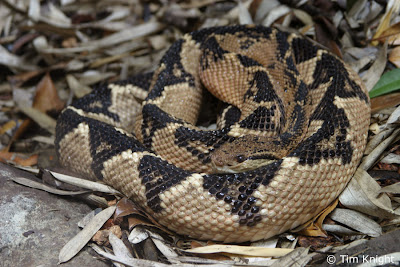 Types of Snakes Pictures : How to Identifying snakes? (List)
