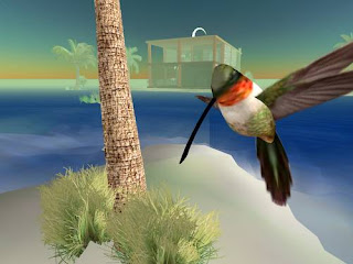 second life animals - hummingbird