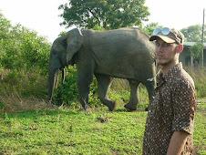 Big elephant!