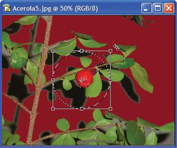rotacionar uma fotografia no Adobe Photoshop
