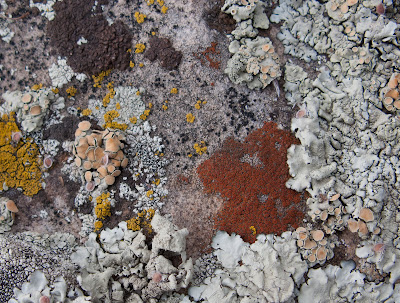 Multi-colored Lichen In Petal And Cup Shapes