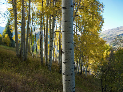 Vail Trail Run, Golden Aspens #2