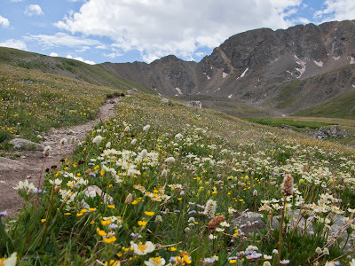 Missouri Mountain Run, Alpine Flowers