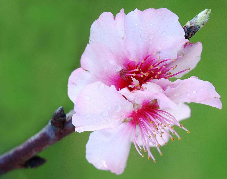 Nicolarobyn Events Seasonal Wedding Flowers Spring