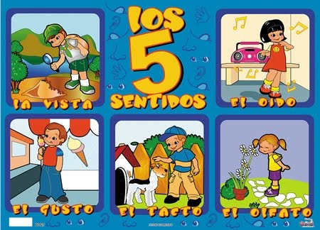 Los  5 Sentidos