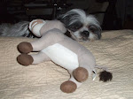 Sophie sleeping with Donkey