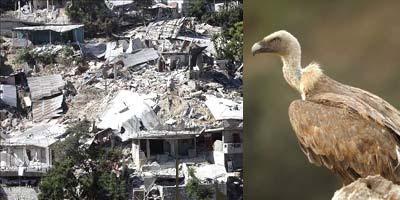 El terremoto de Haití y los buitres de las catástrofes