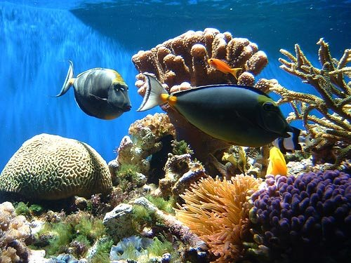 coral reef food chain pictures. What Are Coral Reef Services