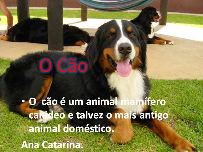 Pesquisa feita pela Ana Catarina