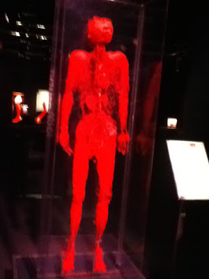 circulatory system veins and arteries. The veins and arteries are