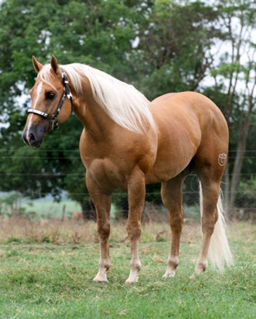 Cavalo de Raça no campo Papel de Parede - Wallpaper