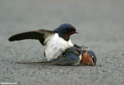 [Image: burung-3.jpg]