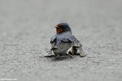 [Image: burung-1.jpg]