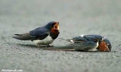 [Image: burung-5.jpg]