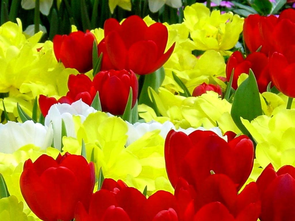 CVECE - Page 3 Flowers