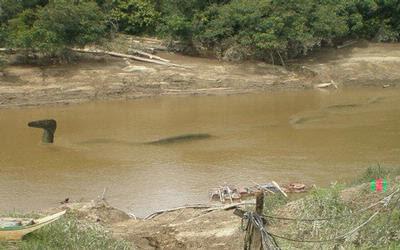 Penemuan Naga di Indonesia