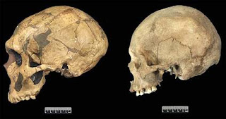 Difference+between+neanderthals+and+modern+humans