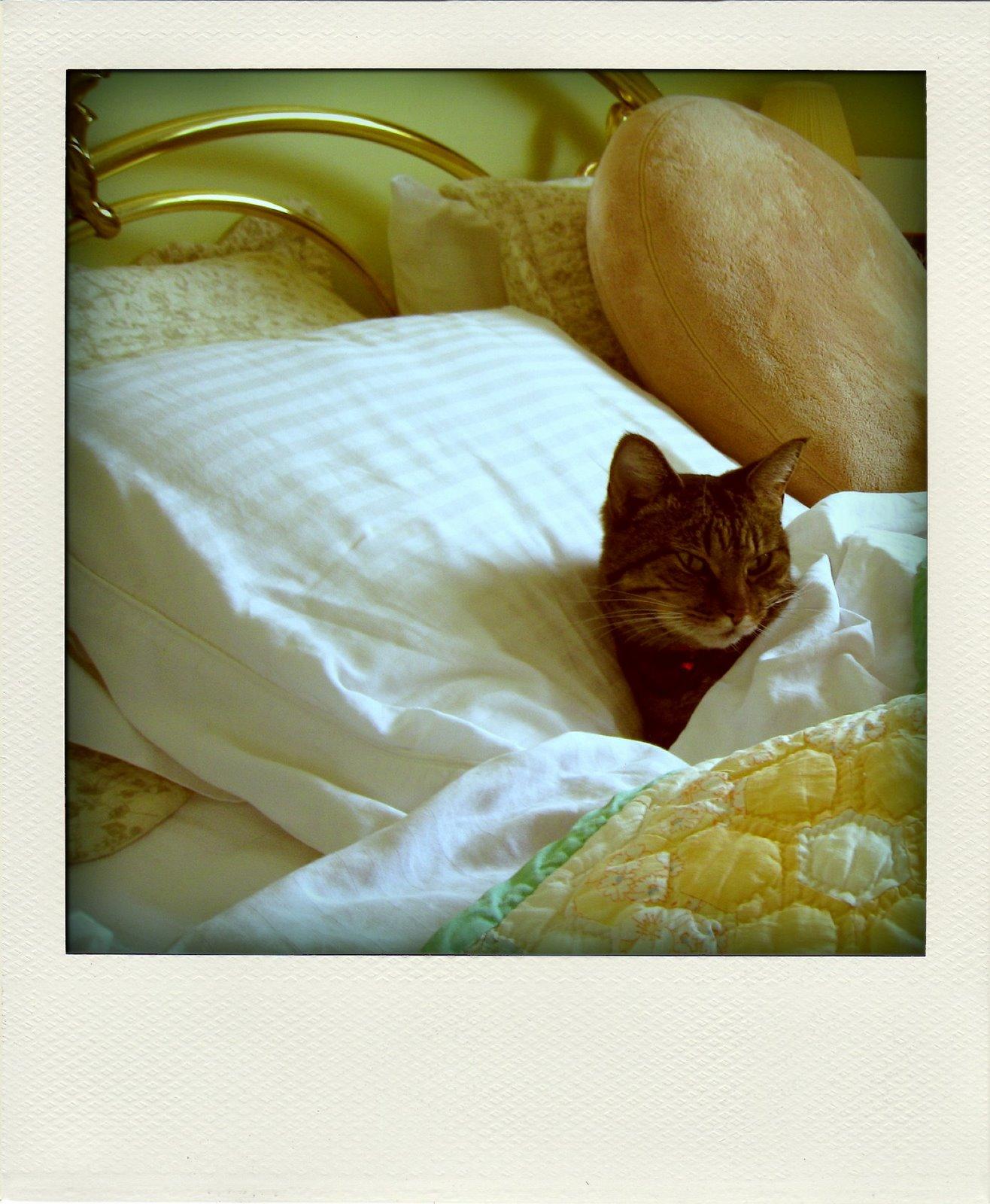 [kitty-pola.jpg]