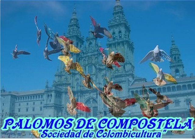 PALOMOS DE COMPOSTELA