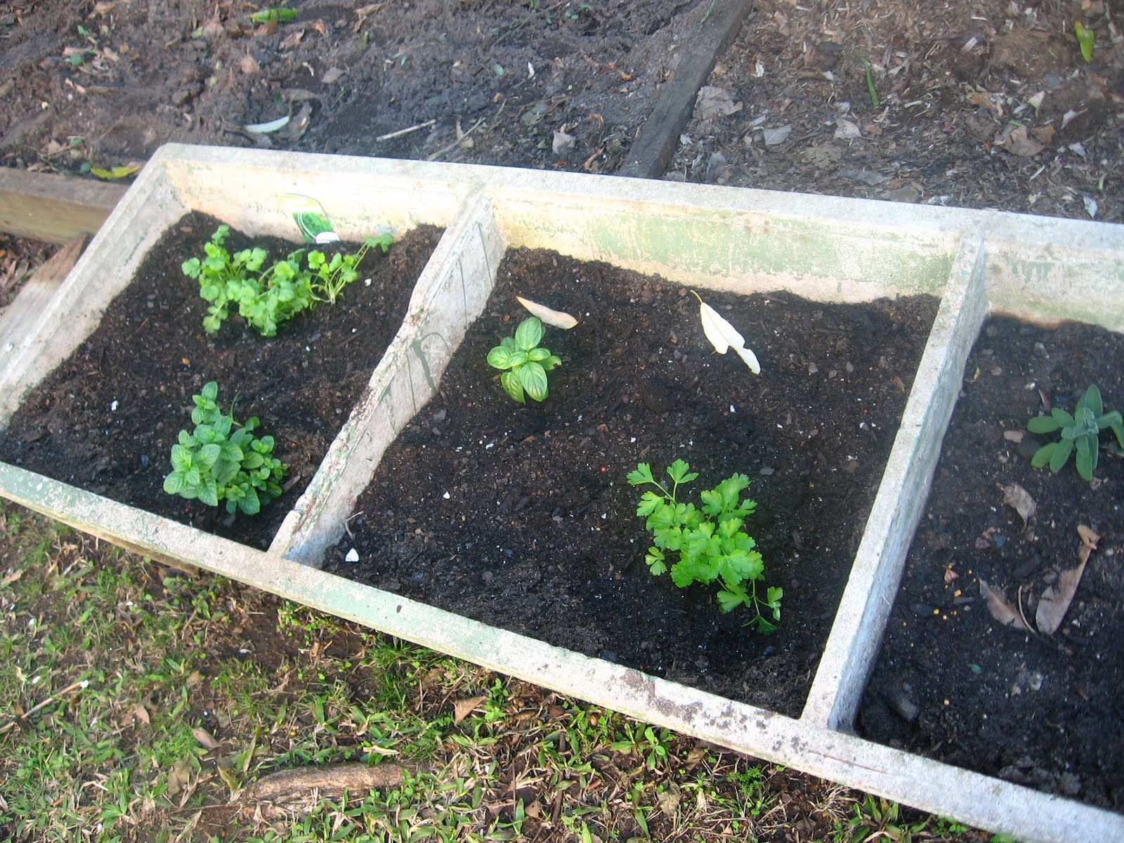 Fun and VJs: Herbs in a concrete laundry tub