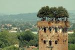 Lucca: la torre dei Guinigi