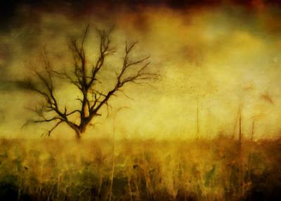 Martin Hoogeboom - Tree (study)