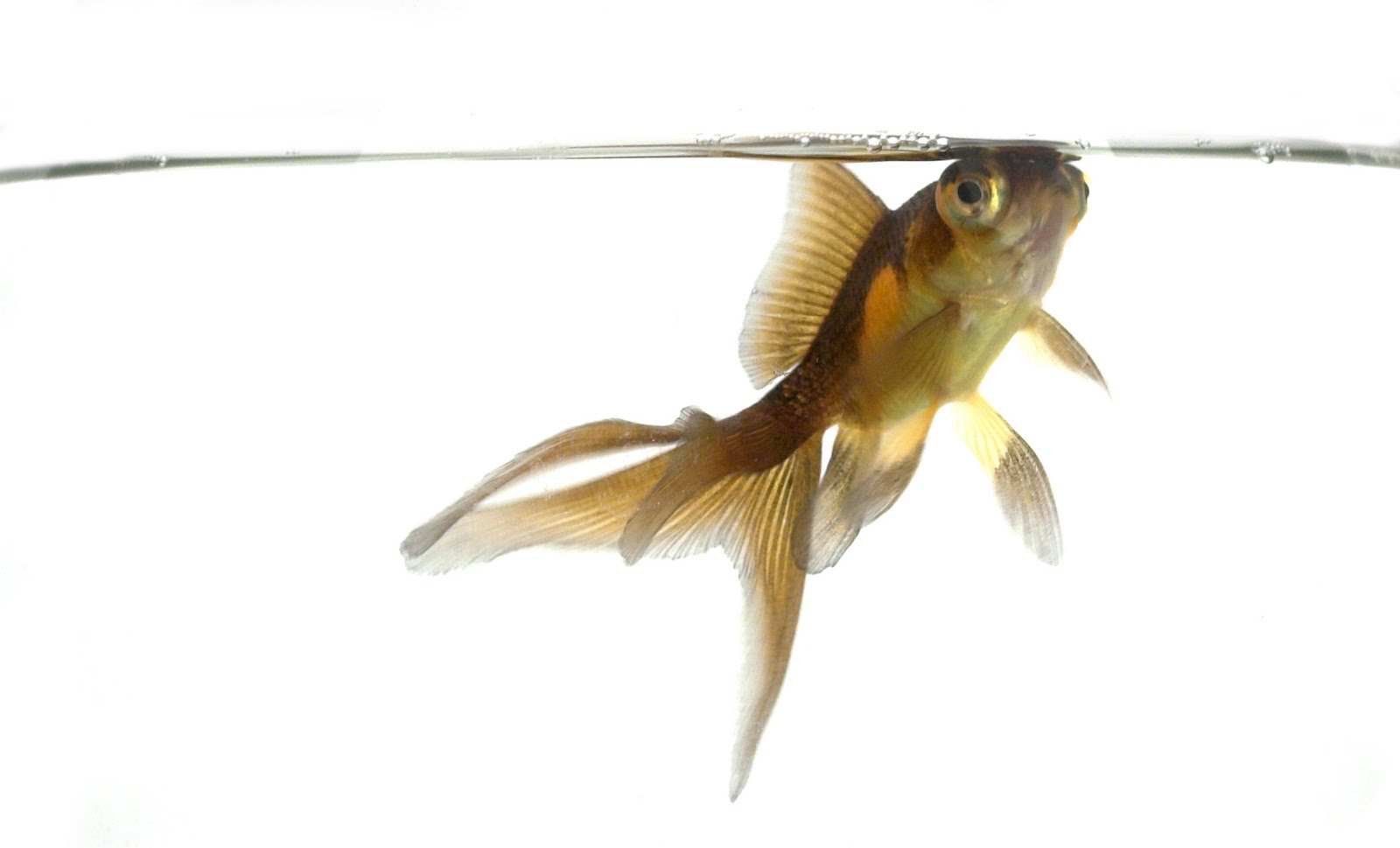 An inch at a time reflections on the journey an ode to for Is a fish wet
