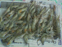 Udang Galah Bongawan