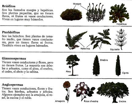Grupos de plantas