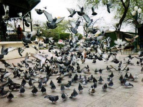 placepigeons