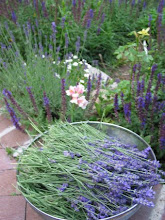First lavender at Cottonwood Inn