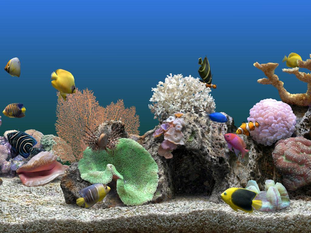http://4.bp.blogspot.com/_rzug61MwOzc/TGBffogzF6I/AAAAAAAAB78/iw7uuKjcm-Y/s1600/aquarium+3.3.JPG