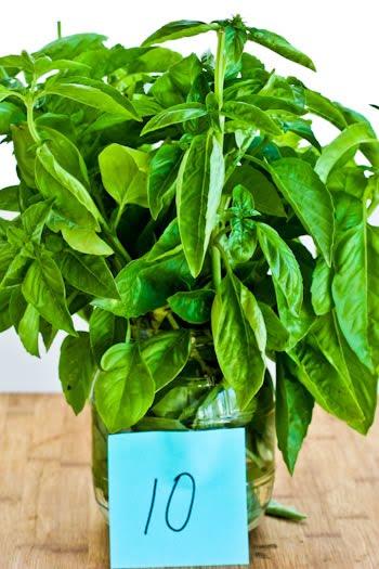 how to preserve cut basil