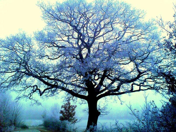 Frost at midnight essay