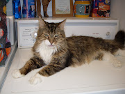 Jazzpurr: Franny Syufy features Maine Coon cats in her newsletter blog this .
