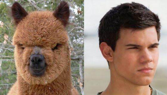 Alpaca......Werewolf......Same Difference
