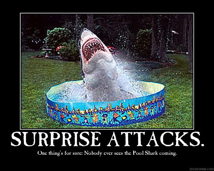shark fun pic
